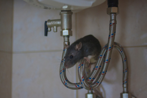 McDuffie Pest Control Rodent Prevention